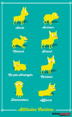 #Astuce : décrypter les attitudes de votre chien. Dog Hand Signals, Dog Body Language, Pug Life, Whippet, Diy Stuffed Animals, Dog Owners, Dog Pictures, I Love Dogs, Funny Dogs
