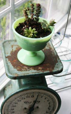 Jadeite & succulent