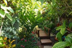 Try This Awesome Ideas How to Make Small Tropical Backyard Ideas for you. This is 10 Ideas How to Make Small Tropical Backyard that will give your Outdoor Events more Fun and Decor Upgrade. Here, you'll also find yourself happy -I guess- when you want Tropical Garden Design, Tropical Backyard, Tropical Landscaping, Tropical Plants, Tropical Gardens, Tropical Forest, Plants For Small Gardens, Small Backyard Gardens, Front Gardens