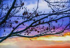 Winters Dream by Amanda Sinco Baldwin Park, Winslow Homer, Alfred Stieglitz, Fine Art America, Amanda, Flora, Framed Prints, Clouds, Wall Art
