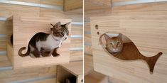Modular Cat Climbing Wall...I need one of these for the house.