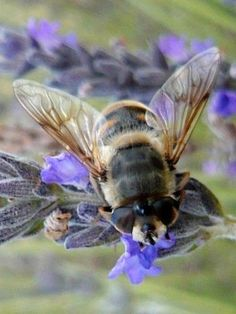 Save the Bees!! Save our Food Sources. Continue the Circle of Life.