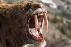 A Sabre-tooth cat
