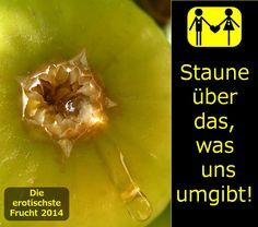 Die erotischste Frucht 2014  - die Feige.