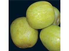 cucumber, lemon cuke | Baker Creek Heirloom Seed Co