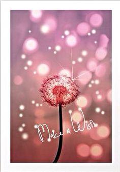 Make a wish . . . | Dandelions
