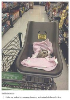 Hedgehog in shopping cart
