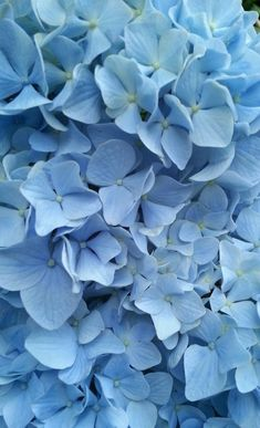 Flowers Aesthetic Pastel Blue 18 Trendy Ideas 20 Ways to Recycle Your Favorite Pair of Jeans 15 breathtaking photos that show the might and beauty of our oceans Light Blue Aesthetic, Blue Aesthetic Pastel, Aesthetic Colors, Flower Aesthetic, Aesthetic Collage, Pastell Wallpaper, Blue Flower Wallpaper, Aesthetic Backgrounds, Aesthetic Iphone Wallpaper