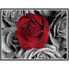 Goedkope Diy Diamant schilderen bloemen rood rose handwerk volledige mozaïek Foto Patroon Kruissteek decor vierkante diamanten borduurwerk F191, koop Kwaliteit diamant schilderen kruissteek rechtstreeks van Leveranciers van China: meer stijlen voor uw kiezen:5D DIY Diamond Painting Kits Round Rhinestone Draw Diamond embroidery Animals Swan Cross Sti