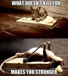 What doesn't kill you...makes you stronger (mouse exercising with mouse trap, haha!)