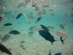 Pulau Perak - Silver island - Fish in the sand bank