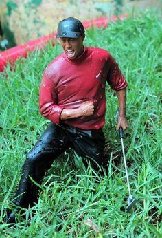 tiger looks to feelin' fine in Felder's lawn