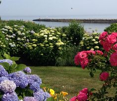 A Cape Cod coastal garden in Dennis. Just breathtaking!