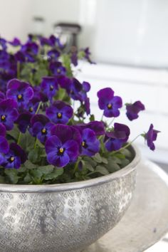 Vakre Viola! Can You Feel It, Spring Is Here, Winter Day, Violets, Traditional House, Pansies, Backyard Landscaping, Hydrangea, Garden Plants