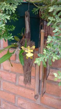 Orquídea. Oncidium cebolleta