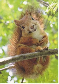 Reasons Why Squirrels Are The New Cats Really Really Cute Squirrel !Really Really Cute Squirrel ! Animals And Pets, Baby Animals, Funny Animals, Cute Animals, Funny Animal Pictures, Cute Pictures, Cute Squirrel, Happy Squirrel, Squirrel Humor