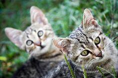 Karmy bez zbóż dla kotów:  http://kakadu.pl/Karmy-dla-kotow/karmy-bez-zbo-dla-kotow.html