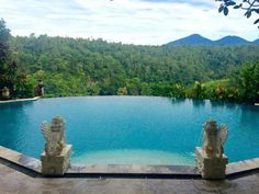 Tropical Pool, Ubud, Trip Advisor, Bali, Nature, Travel, Naturaleza, Viajes, Destinations