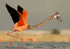 Flaraffe #flamingo #giraffe #strange