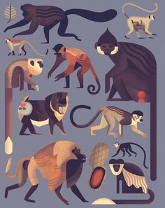 """Mad About Monkeys: A Loving Illustrated Encyclopedia of Weird and Wonderful Kindred Creatures """"Mad About Monkeys"""" A captivating primer on our fellow primates, from belligerent baboons to brilliant macaques. by Maria Popova"""
