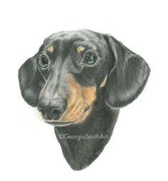 Coloured Pencil Drawing 'Miniature Dachshund' A4 Print