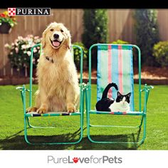 Sit back. Relax. And pin your favorite pic of cats or dogs enjoying spring break and you could win FREE Purina® for a Year! Enter today! Go to http://sweeps.piqora.com/PurinaSpringBreak. NO PURCHASE NECESSARY. Valid in 50 U.S. & D.C. Must be 18+ (19+ in AL & NE; 21+ in MS), & own a cat or dog or both. Ends 3:00 p.m. ET on 4/29/14. Void where prohibited. See Official Rules at http://sweeps.piqora.com/PurinaSpringBreak. #PurinaSweeps