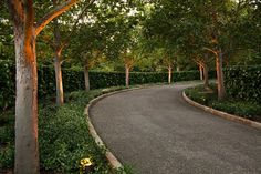 Imagine a tree lined driveway to get to your house....