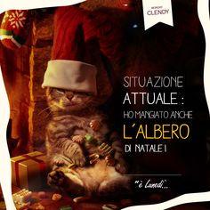 """""""Situazione attuale: Ho mangiato anche l'albero di Natale"""" E la dieta...il 7 gennaio!  """"BUON NATALE"""" #natale #cats #umorismo #dieta #christmas"""