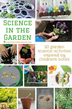 Learn about plants and animals in our backyards or gardens with these garden science activities. Each of the science in the garden activities was inspired by a children's book. Outdoor Activities For Kids, Steam Activities, Outdoor Learning, Spring Activities, Science Activities, Science Projects, Science Experiments, Outdoor Games, Science Education