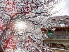A restaurat trei case maramureșene și a construit un colț de rai într-un sat din Alba – Fabrika de Case