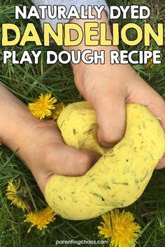 How to Naturally Dye Play Dough using Dandelions #parentingchaos #preschool #sensoryactivities #playdough