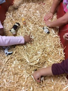 We filled the sensory table with hay and hid the farm animals during our farm unit.