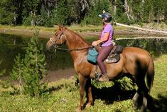 Trail Riding Safety Essentials – The Horse Trail Riding Horses, Horse Riding, Equestrian Outfits, Equestrian Style, Equestrian Problems, Equestrian Fashion, Types Of Horses, Horse Accessories, Horse Property