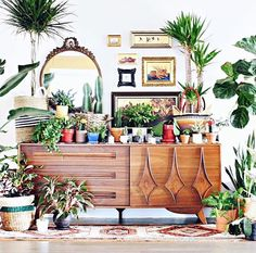 WEBSTA @ my.bohemian.abode - YES!!! Swooning over @mvwetter's gorgeous pic of all his plants in one spot! Love this idea!  Madison has created a hashtag #allmyplantsononething, so if you want to try the same thing (I'm definitely going to this week - watch this space!), make sure you use the hashtag. And of course, follow @mvwetter for more of this kind of amazingness ❤️#mybohemianabode