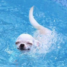 Chip wanted to swim in the pool like this guy.  I miss him.