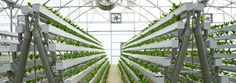 Pictures from pegasusagritech hydroponic farms