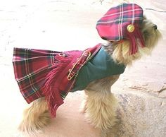 Dog Costumes, Pet Halloween Costumes For Dogs
