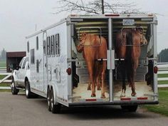 I so want this decal on the back of my horse trailer! Horse Barns, Horse Tack, Horse Stalls, Barn Stalls, Dressage, Horse Gear, All About Horses, Horse Quotes, Horse Trailers