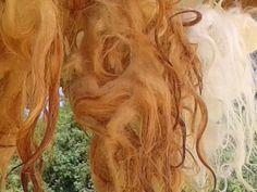 Taller de tintes naturales para niños. Lana de oveja latxa de Oñati, teñida y sin teñir con cástaras de cebolla. Verano 2015. Facebook: lanatalan