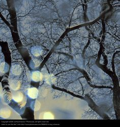 Water Winter Forest Snow - a Royalty Free Stock Photo from Photocase