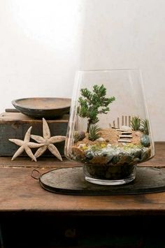Need some beachy inspiration in the middle of winter? Why not make this coastal terrarium scene? Photo: Kindra Clineff #terrariums