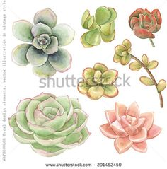 Watercolor collection of succulents for your design, hand-drawn illustration. - stock vector