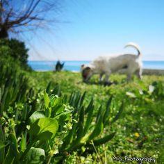Dog Life, Sunny Days, Dogs, Photography, Animals, Photograph, Animales, Animaux, Doggies