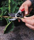 How to prune spring-flowering shrubs - Canadian Gardening