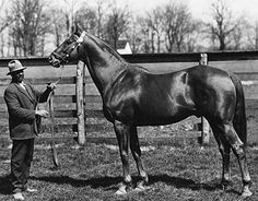 The incomparable race horse, sire, and broodmare sire - Man o' War. He was the sire of Tapit's eighth dam, Spotted Beauty. One more generation of gray mares to go!