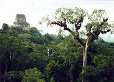 Tikal : Temple IV I sat up there in the sunshine listening to howler monkeys ♡ Tikal, South America, Monument Valley, Mystic, Temple, Mexico, Monkeys, World, Places