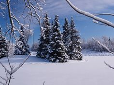 Winter Blessings Bear Much Fruit - by Virginia Lieto - In each season, Christ blesses us. Read to learn more about how winter blessings bear much fruit and what you can do to grow closer to Christ this season. http://virginialieto.com/winter-blessings-bear-much-fruit/…