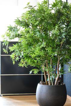 Grünpflanzen | Silk&Fine Willst du frisches Grün an deinem Arbeitsplatz und hast keine Zeit für die Pflege? Unsere künstlichen Grünpflanzen sind genau das Richtige. Nur mit einem passenden und durchdachten Pflanzkonzept kompletierst du die Inneneinrichtung. Die hochwertigen Grünpflanzen aus Textil benötigen kein Wasser und sehen zu jeder Zeit frisch und gepflegt aus. Jaco, Color Patterns, Plants, Fresh Green, Faux Plants, Workplace, Indoor House Plants, Water, Decorating