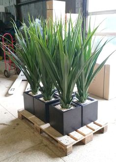 Artificial large green Pandanus set in Cube Planters, destined for a roof garden. Fake Plants Decor, Plant Decor, Swimming Pools Backyard, Outdoor Planters, Artificial Plants, Outdoor Projects, Planting Succulents, Indoor Plants, House Plants