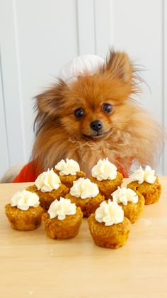 Pumpkin Spice Cupcakes for Dogs With these adorable cupcakes, your dog can now enjoy the pumpkin spice trend with you! Pumpkin Spice Cupcakes for Dogs With these adorable cupcakes, your dog can now enjoy the pumpkin spice trend with you! Cupcakes For Dogs Recipe, Dog Cake Recipes, Dog Cupcakes, Dog Treat Recipes, Dog Food Recipes, Dog Biscuit Recipes, Puppy Treats, Diy Dog Treats, Healthy Dog Treats